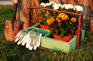 A shovel, gloves, and fall flowers ready for planting