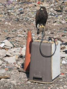 Xena at the landfill